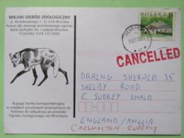 "Poland 1999 Postcard Miejski Ogrod Zoo (fox ?) - Henrykow To England - Country Estates Gluchach - """"CANCELLED"""" Cancel - 1944-.... Republic"
