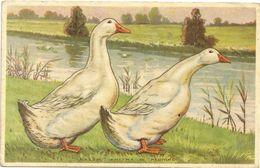 GALLINE  --ANITRA  DI PECHINO  - FACILE ALLEVAMENTO   RUSTICA -PUBLICITA'  SUL RETRO  UFFICIO AGRARIO  MILANO- - Animals