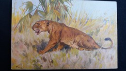 CPA LION DESSIN SIGNE ED STZF ? - Lions