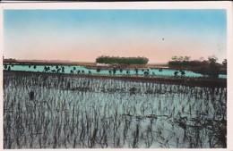 SUD VIETNAM----SAIGON--repiquage Du Riz---voir 2 Scans - Viêt-Nam