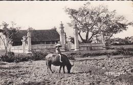 TONKIN----VIETNAM  ?--enfant Gardant Son Buffle---voir 2 Scans - Laos