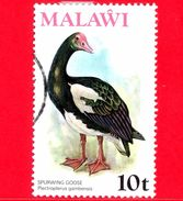 MALAWI - Usato - 1975 - Fauna - Uccelli - Oca Armata - Spur-winged Goose (Plectropterus Gambensis) - 10 - Malawi (1964-...)