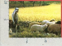 CARTOLINA NV PALESTINA - BETHLEHEM - Sheperd's Field - 10 X 15 - Palestina