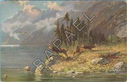 Cerf Au Bord D'Un Lac - Animaux & Faune