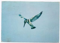 GAMBIA-BIRD - PIED KINGFISHER (CERYLE RUDIS) HOVERING OVER THE GAMBIA RIVER (J.ARTHUR DIXON) /THEMATIC STAMP-RELIGION - Gambia
