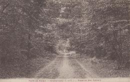 Forêt De Sénart Champrosay 91 - Réserve Des Faisans - France