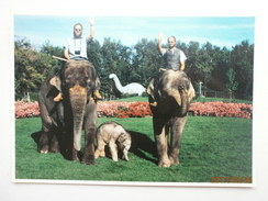 Postcard Sri Lankan Elephant Recent Birth Of Chanda Calgary Alberta Canada My Ref B21771 - Elephants