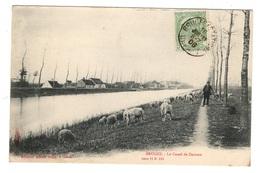 BELGIQUE - BRUGES Le Canal De Damme, Pionnière - Brugge