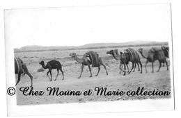 TOUGGOURT ALGERIE 1947 - DES DROMADAIRES DANS LE DESERT AFRICAIN - POUR SOULTZ HAUT RHIN - PHOTO - Afrique