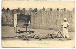 GAMBIE - Crocodile Tué En Gambie - Gambie