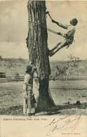 080817 - AUSTRALIE SYDNEY - Aborigènes Tribu - Native Climbing Tree With Vine - Aborigènes