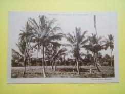 Mayotte - Combani: Les Cocoteraies - Cliché John Baptist - Bel état - édition Issoufali - Mayotte