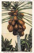 ¤¤  -  JAMAÏCA   -  Paw-Paw Tree    -  ¤¤ - Jamaïque
