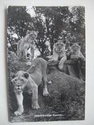 M03 Postcard Stapleford - Lion Reserve - 1979 - Other