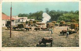 DETROIT - 1904 - WEICHING SUGAR CANE BEFORE UNLOADINGAT THE MILL - Detroit
