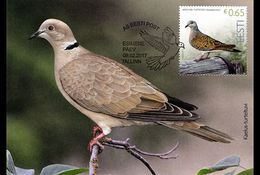 ESTONIA 2017 MAXIMUM CARD Bird Of The Year - Turtledove - Palomas, Tórtolas