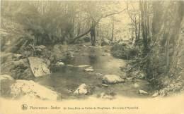 NONCEVEUX-SEDOZ - Un Sous-Bois Au Vallon Du Ninglinspo (Environs D'Aywaille) - Aywaille