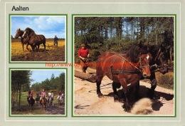 Paarden - Aalten - Aalten