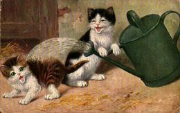 Arrosoir Et 2 Chats - Chats