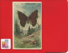 TEINTURE LA KABILINE Superbe Chromo Papillon Morio Imp Gamichon - Chromos