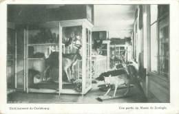 Etablissement De Carlsbourg - Une Partie Du Musée De Zoologie - Paliseul