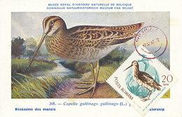D31206 CARTE MAXIMUM CARD 1965 ROMANIA - BECASSINE CAPELLA CP MUSEUM ORIGINAL - Birds