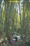 ASIE--CHINE-CHINA--under The Bernteal Hedge Bamboo--zhang Guo Hua--voir 2 Scans - Chine