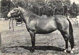 -ref V904-animaux -chevaux -cheval -publicité Santé -soufrane -serum Nasal Soufré -elevage Hollandais -new Forest  - - Pferde