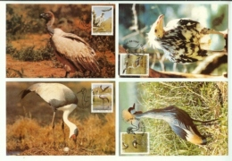 TRANSKEI, 1991, Mint Maxi Cards, Endangered Birds, Mi 106-109 - Transkei