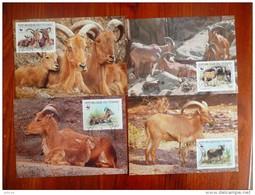 WWF Chad Tchad Tschad Barbary Sheep Goat Mähnenspringer Mouflons 1988 CM MC MK Maximum Card Carte Maximumkarte - Maximumkarten