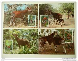 WWF  Zaire Okapi 1984  4 CM MK MC Maxi Maximum Carte Card Maxicard MAximumkarte - Maximum Cards