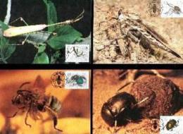 SWA, 1987 Mint Maxi Cards, MI Nr. 50-53, Insects - South West Africa (1923-1990)