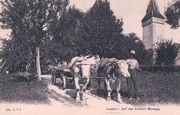 Luzern, Auf Der Hintern Musegg, Attelage De Boeufs (184) - Attelages
