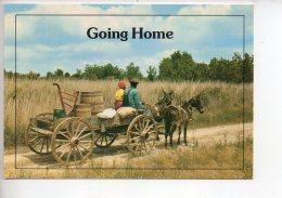 REF 289  : CPM Louisiane Attelage Going Home - Etats-Unis