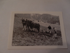 Cheval  ( Chevaux Avec Charrue Au Travail ) ( Neuve ) - Horses