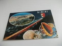 Conchiglia Shell RIMINI  STEMMA VEDUTINA SU NOTTURNO - Pesci E Crostacei