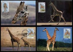 WWF  Uganda Ouganda  Rothschild's Giraffe Girafe De L´Ouganda 1997 CM MC MK Maximum Maxi Carte Card Maximumkarte Maxicar - Maximumkarten