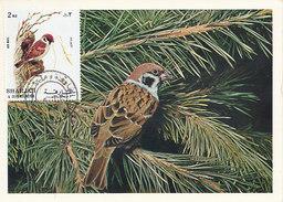 D31345 CARTE MAXIMUM CARD 1972 SHARJAH - PASSER MOINEAU CP ORIGINAL - Passeri