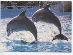 Dauphin - Dauphins (Antibes - Marineland) Cp Vierge - Dauphins