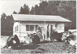 Ernen - Frid - Alpe Frid - Schlag Feriendorf Fiesch - 1975 - Vaches - VS Valais