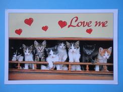 Gatti - Cuccioli - Chats