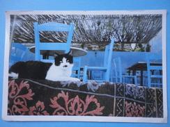 Gatto - Charlie Chaplin Cat - Chats