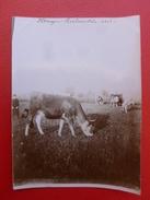 REALMONT PATURAGE REALMONTAIS 1912  PHOTO 11.5 X 8.5 - Lieux