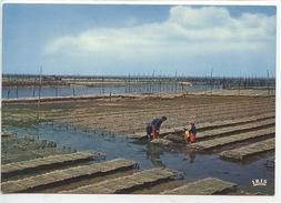 Baie D'Arcachon : Les Champs D'huitres (n°543 Vierge) Ostréiculture - Pêche