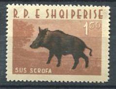 206 ALBANIE 1962 - Yvert 599 - Sanglier - Neuf ** (MNH) Sans Trace De Charniere - Albania
