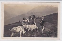 Alpage Vaches, Chèvre, Mouton, Enfants En Costumes De Pâtres - Elevage