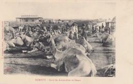 Djibouti 'Stand Des Automobiles Du Desert Camels Near Walls Of City, C1900s Vintage Postcard - Djibouti