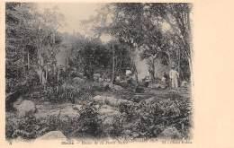 SEYCHELLES / Mahé - Route De La Forêt Noire - Seychelles