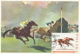 D31372 CARTE MAXIMUM CARD TRIPLE 1967 POLAND - HORSE RACING CP ORIGINAL - Horses