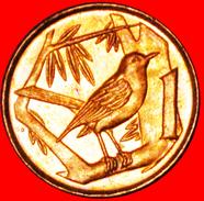 § BIRD: CAYMAN ISLANDS ★ 1 CENT 1999 MINT LUSTER! LOW START★ NO RESERVE! - Cayman Islands